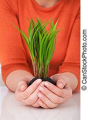 donna, saplings, presa a terra, scrivania