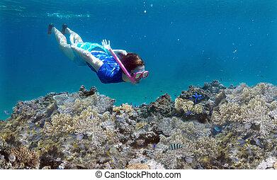 donna, snorkeling, subacqueo, sopra, uno, barriera corallina, in, figi