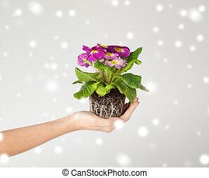 donna, suolo, fiore, presa a terra, mani