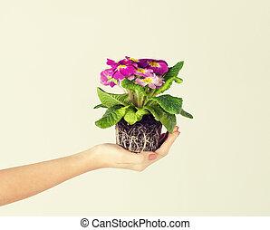 donna, suolo, fiore, tenere mani