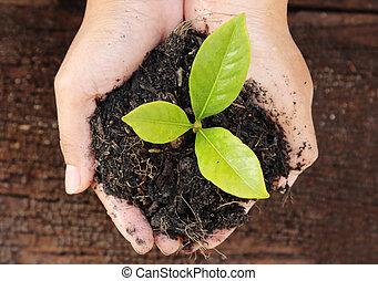 donna, titolo portafoglio mano, uno, poco, albero verde, plant.