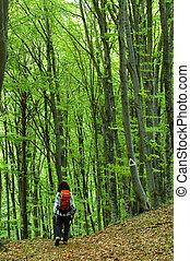 donna, trekking, in, uno, faggio, foresta