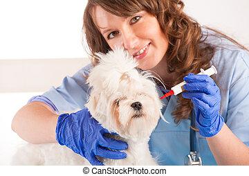 donna, veterinario, presa a terra, uno, cane