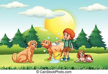 donner, garçon, parc, chiens, bain