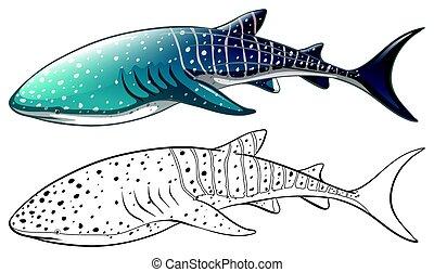 Doodle animal outline of killer whale illustration