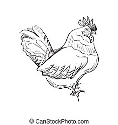 doodle bantam isolated in white background. Excellent vector...