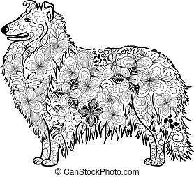 doodle, cachorro collie