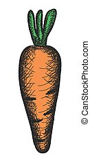 doodle carrot, vector illustration
