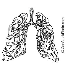 Doodle drawing organ lung on a white background
