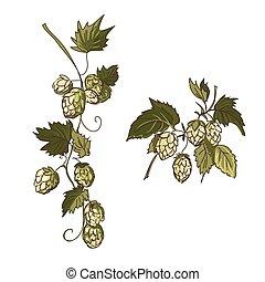 doodle hop - hand drawn, sketch illustration of hop,...