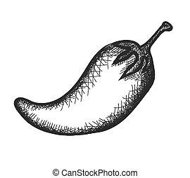 doodle pepper, vector illustration