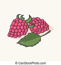 Doodle raspberry isolated