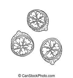 Doodle style or cartoon lemon fruit with contour.