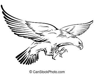 doodle, vetorial, ilustração, águia
