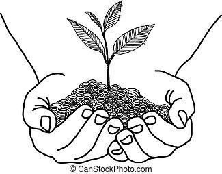 doodles, manos, diseño, tenencia, planta de semillero