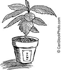 doodles sketch of tree growing in pot