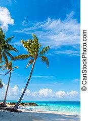 dookoła, plaża, wyspa, dłonie, piękny, biały, tropikalny, ...
