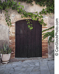 Door and ivy on the wall