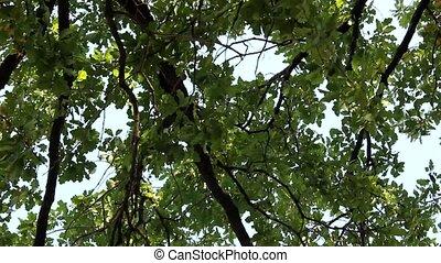 door, bomen, aanzicht