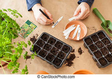 doosje, man, home., plantende zaden, sowing, germination, ...