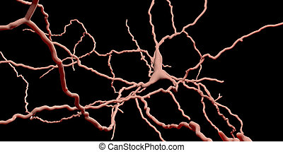 Dopaminergic neuron. Degeneration of this brain cells are responsible for development of Parkinson's disease