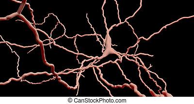 dopaminergic, neuron., degeneration, von, dieser, gehirn, zellen, ar, verantwortlich, für, entwicklung, von, parkinson's, krankheit