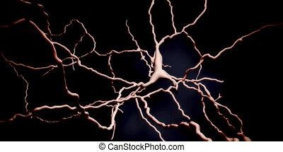 dopaminergic, neuron., degenerering, i, denne, hjerne, celler, vær, ansvarlige, by, udvikling, i, parkinson's, disease