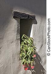doppio, fiore, tuberoso, begonie, in, uno, vaso, su, il, davanzale