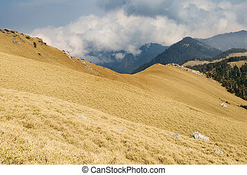doré, élevé, automne, prairie, mountain., paysage