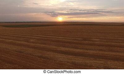 doré, aérien, champs, 4k, blé, vue