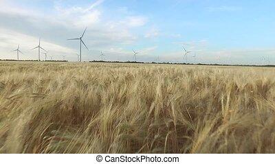 doré, aérien, sky., clair, agricole, turbines, haut, champ, paysage, fond, fin, blé, vent, survey.
