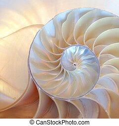 doré, coquille, proportion, spirale, symétrie, section, moitié, dos, haut, lit, perle, nautile, croissance, fibonacci, mère, fin, croix, structure