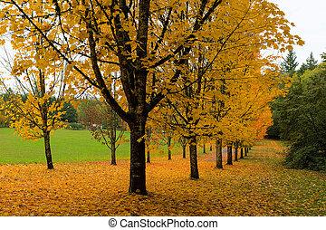 doré, couleurs, érable, arbres, automne