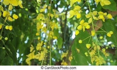 doré, définition, arbre, douche, élevé, panoramique, fleurs