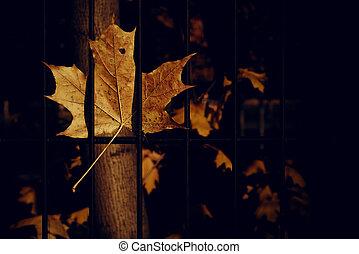 doré, feuille, barrière, métal, automne, érable