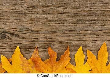 doré, feuille, bois, fond, frontière, érable