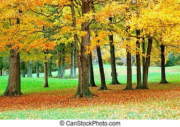doré, feuilles, 2