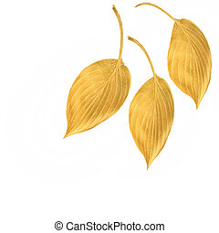 doré, feuilles, hosta