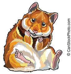 doré, hamster