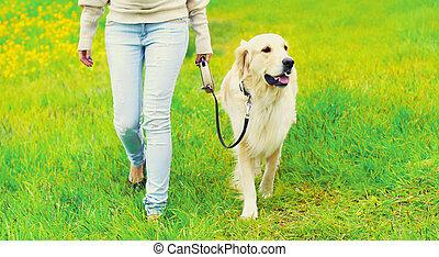 doré, marche, été, chien, laisse, propriétaire, jour, retriever