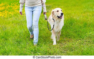 doré, marche, été, chien, propriétaire, herbe, jour, retriever, heureux