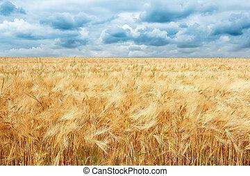 doré, nuages, champ, dramatique, orage, blé