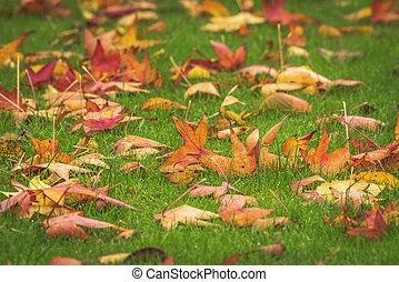 doré, pelouse, feuilles, vert, automne, érable