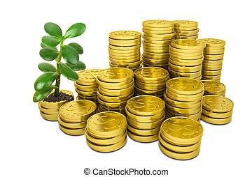 doré, pièces, arbre, pile, argent