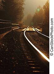 doré, solitaire, automne, pistes, ferroviaire, jour