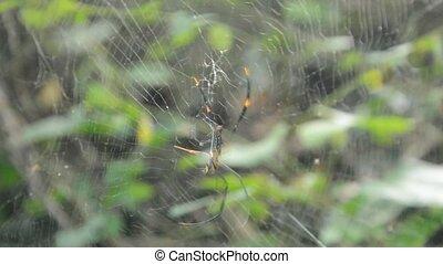 doré, victimes, droping, araignés, batik, forêt, escalade, ...