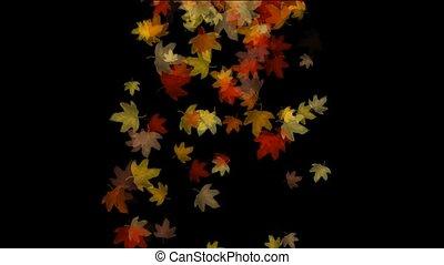 doré, voler, érable, pousse feuilles