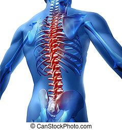 dor traseira, em, corpo humano