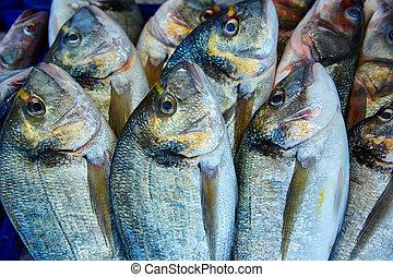 Dorada fish Sparus aurata from Mediterranean - Dorada fish...