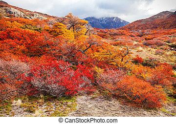 dorado, bosque, patagonia